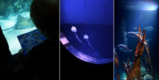 Sea Life London Aquarium - oceanarium w sercu brytyjskiej stolicy londyn - haart.pl blog diy zrób to sam 7