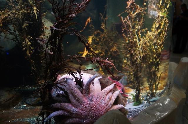 Sea Life London Aquarium - oceanarium w sercu brytyjskiej stolicy londyn - haart.pl blog diy zrób to sam 4