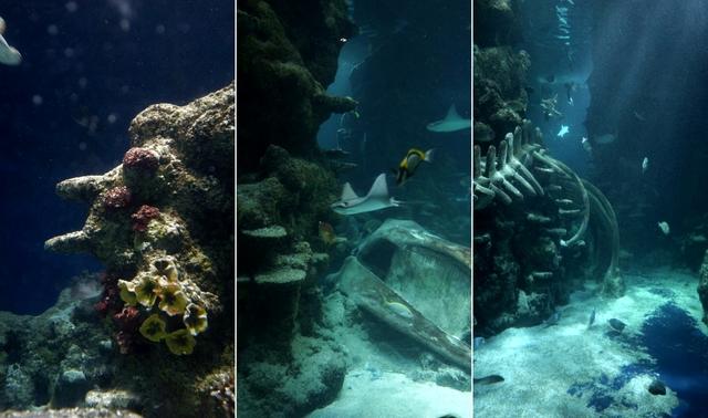 Sea Life London Aquarium - oceanarium w sercu brytyjskiej stolicy londyn - haart.pl blog diy zrób to sam 8