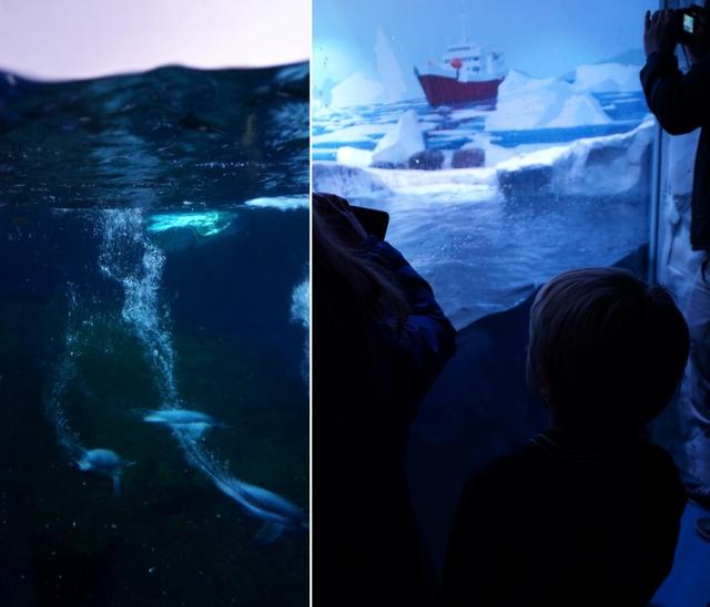 Sea Life London Aquarium - oceanarium w sercu brytyjskiej stolicy londyn - haart.pl blog diy zrób to sam 9