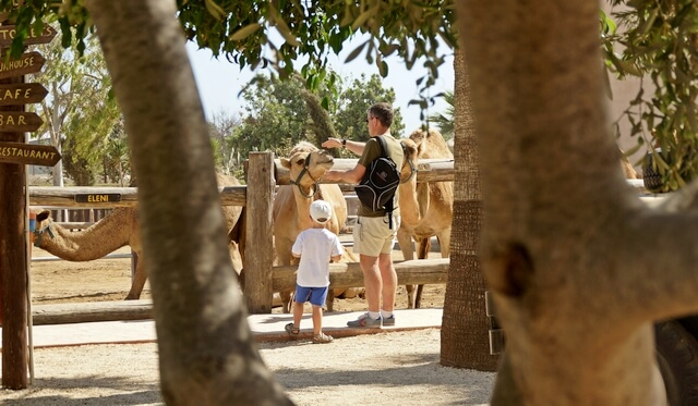 cypr atrakcje dla dzieci, camel park koło limassol i larnaka