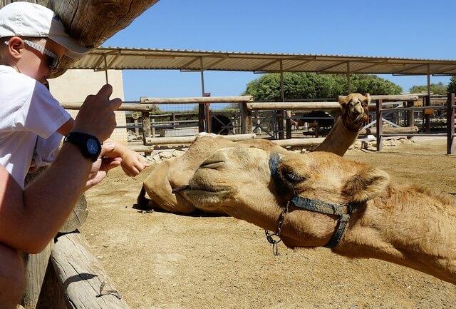 schronisko dla wielbłądów, cypr, camel park