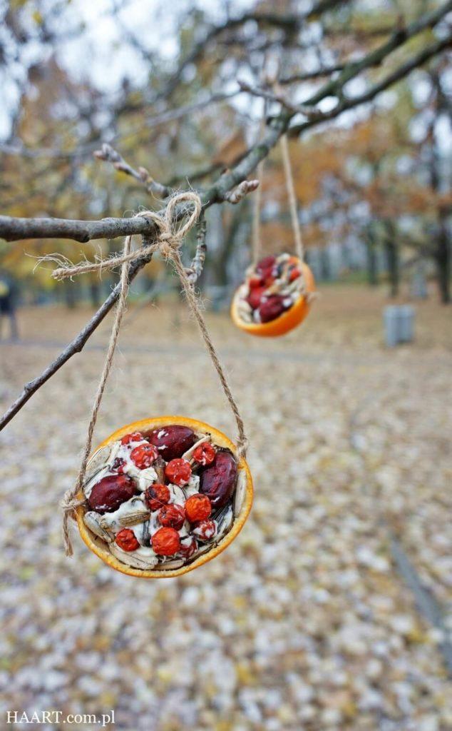 karmnik dla ptaków diy, suszone owoce i ziarna
