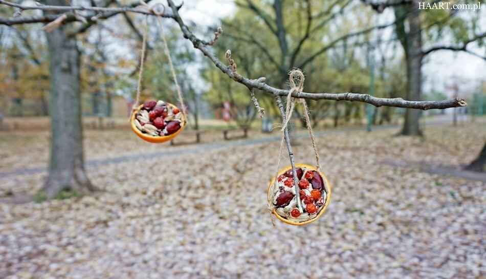 karmnik dla ptaków diy, mandarynka z ziarnami na gałęzi