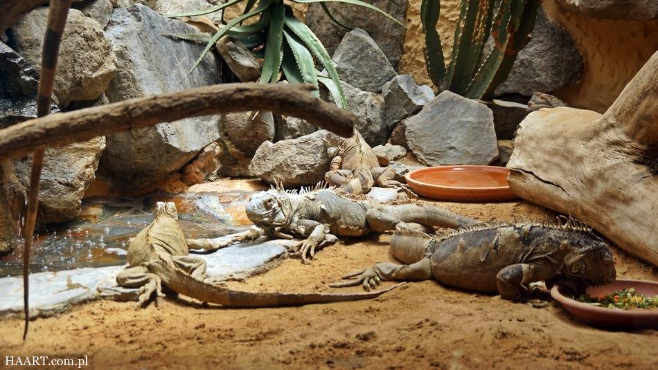 urlop na gran canaria ile kosztują 2 tygodnie na własną rękę hiszpania wyspy kanaryjskie palmitos park jaszczurki - haart.pl blog diy zrób to sam 22