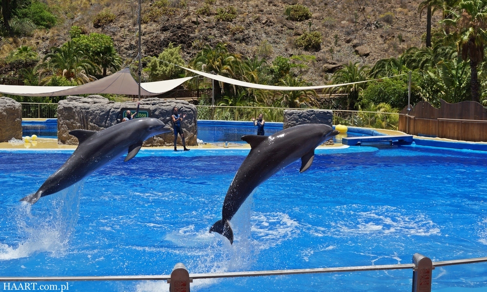 urlop na gran canaria ile kosztują 2 tygodnie na własną rękę hiszpania wyspy kanaryjskie palmitos park delfiny - haart.pl blog diy zrób to sam 20