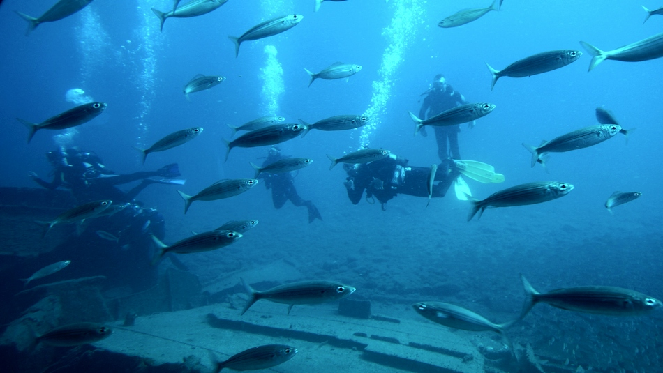 urlop na gran canaria ile kosztują 2 tygodnie na własną rękę hiszpania wyspy kanaryjskie łódź podwodna ryby - haart.pl blog diy zrób to sam 18