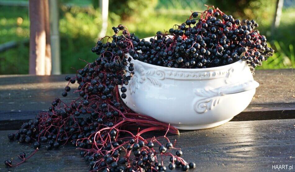 dżem z czarnego bzu, owoce