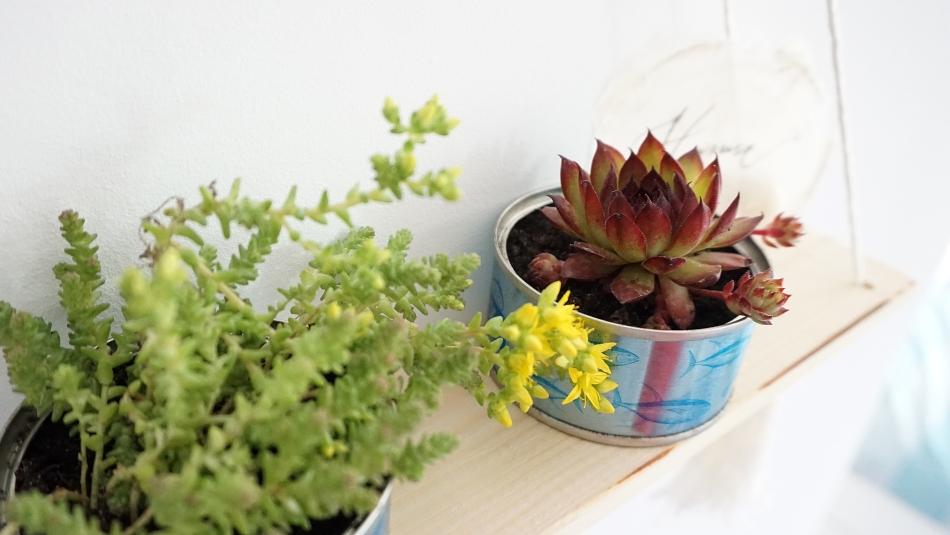 kwietnik dla sukulentów drewniana półka na kwiaty ryobi - haart.pl blog diy zrób to sam 18