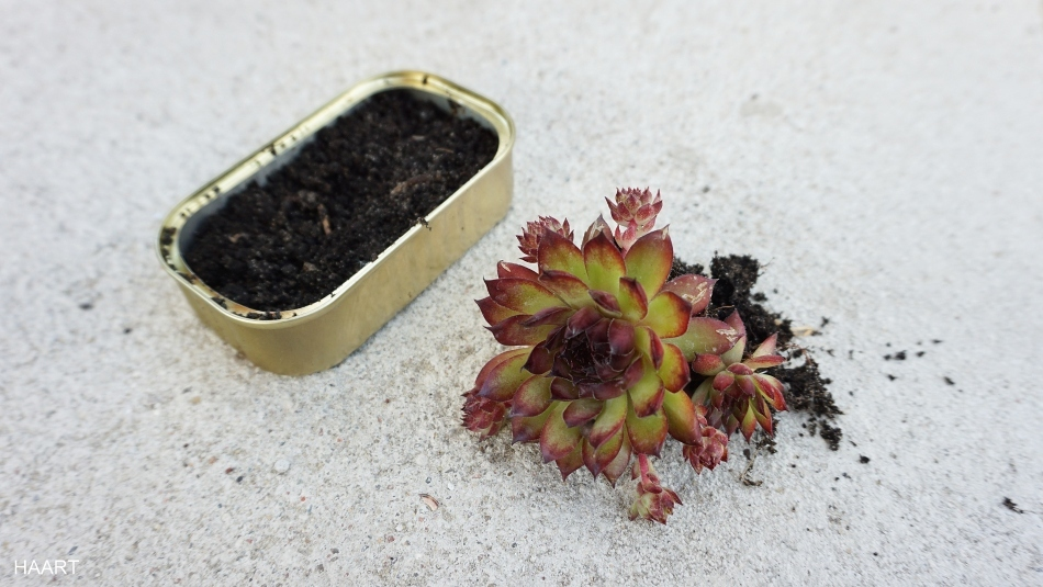 kwietnik dla sukulentów drewniana półka na kwiaty ryobi - haart.pl blog diy zrób to sam 12
