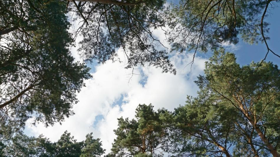 Bacówka Radawa las świerki sosny HAART.pl blog diy