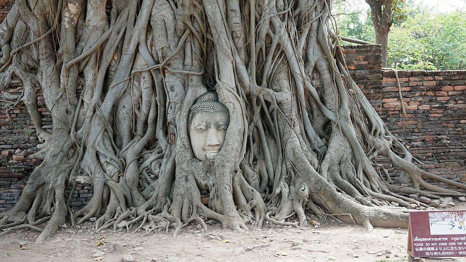 ayutthaya, tajlandia, bangkok, wat maha that, głowa buddy w korzeniach drzewa bohdi, świątynia, relacja z wycieczki - haart.pl blog diy zrób to sam 2