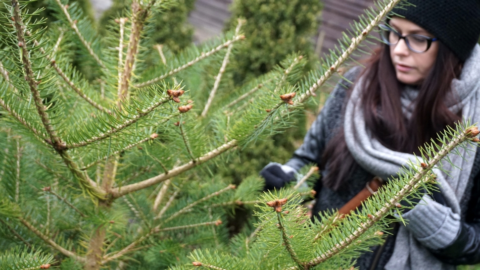 Sopot zimą. Zielone choinki, iglaki, Hania Kozłowska HAART.pl blog diy