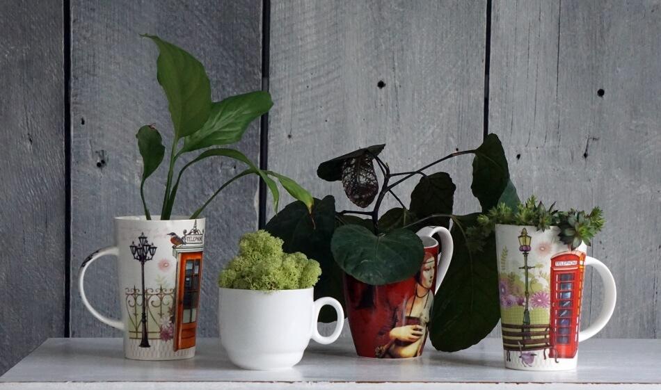 kwiaty i sukulenty w filiżankach i kubku, pomysły na aranżację