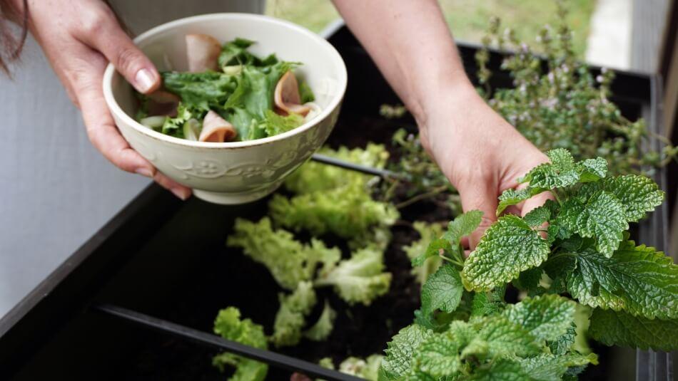 przyjęcie w ogrodzie, zioła na stół lub do sałatki