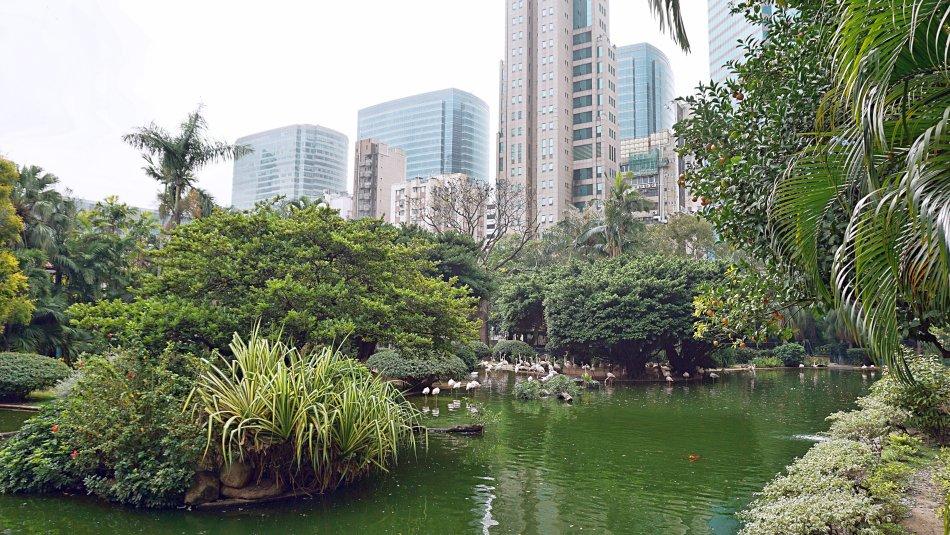 zwiedzanie hong kongu kowloon park flamingi staw