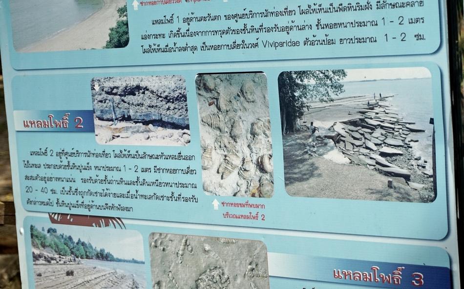 fossil shell beach w krabi