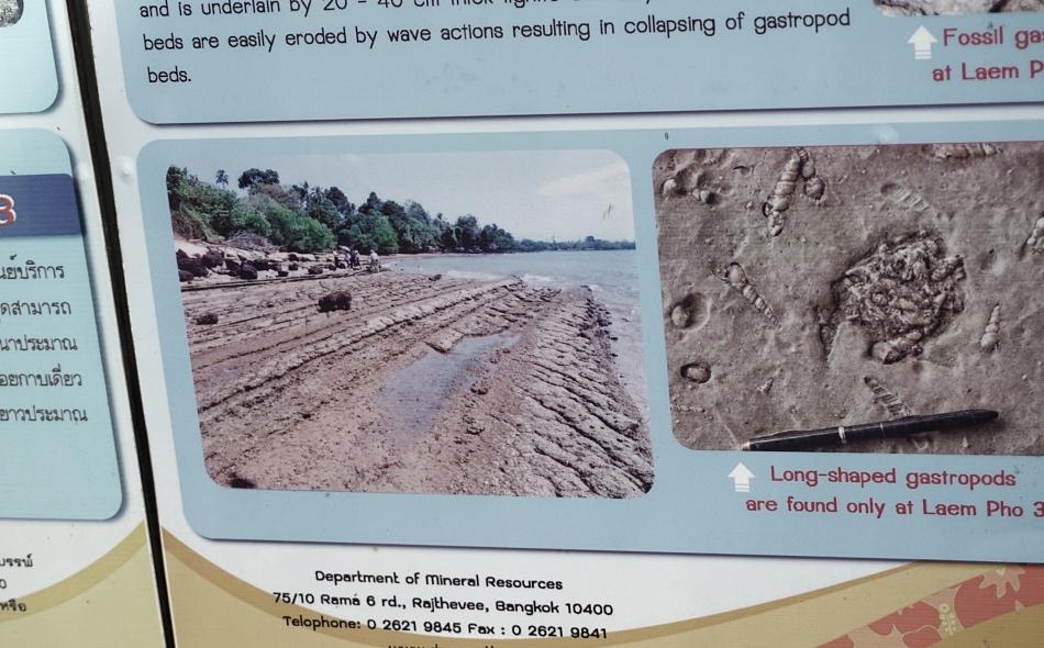 fossil shell beach niedaleko krabi, tajlandia