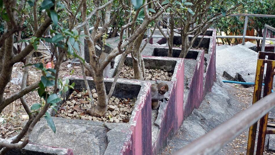 Makaki w Hong Kongu, boczna droga do klasztoru 10000 buddów