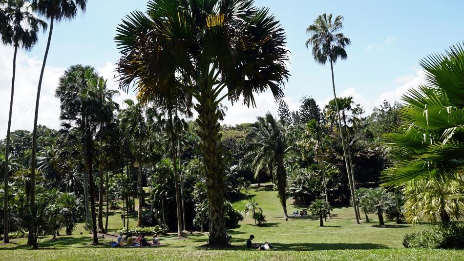 Botanic Garden w Singapurze