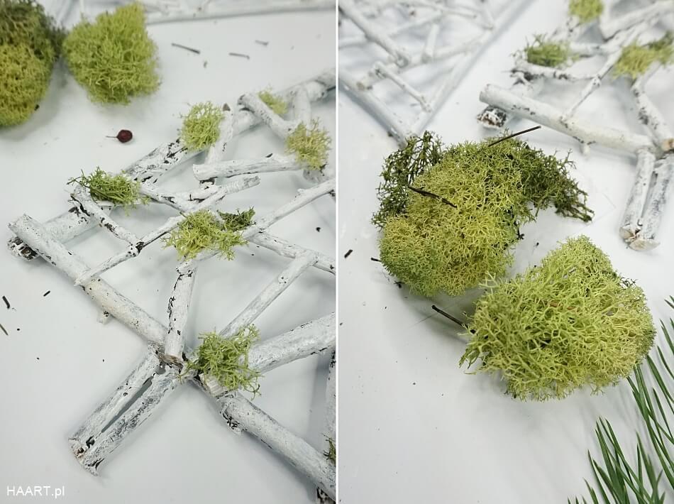 Żywy mech chrobotek na choince
