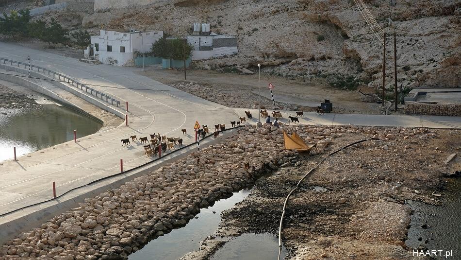 Kozy w Omanie