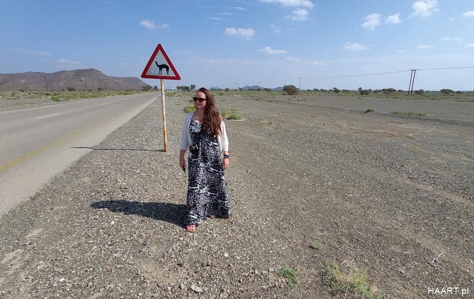 wielbłądy w Omanie